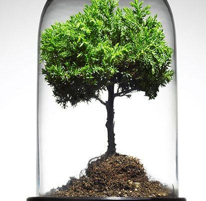 na zdjęciu jest drzewko w szklanej pokrywie