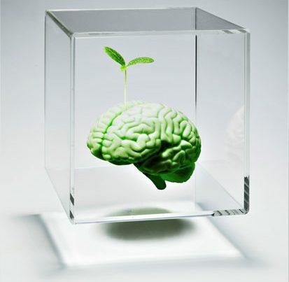 na zdjęciu jest przezroczysty sześcian a w nim zielony mózg, z kótego wyrasta dwulistna roślinka