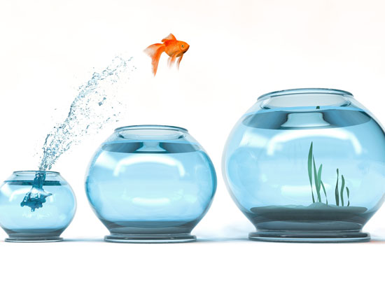 na zdjęciu są 3 akwaria, od najmniejszego do największego. z najmniejszego do najwiekszego przeskakuje złota rubka