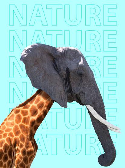 na zdjęciu jest żyrafa z głową słonia