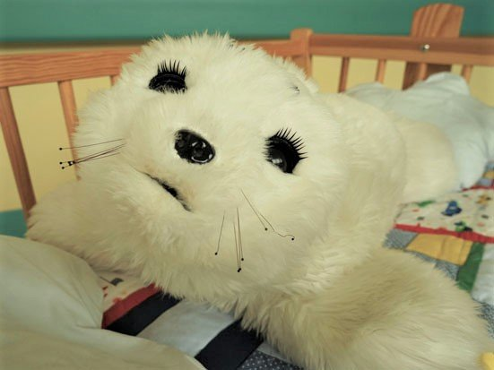 na zdjęciu jest foczka Paro leżąca w łóżeczku
