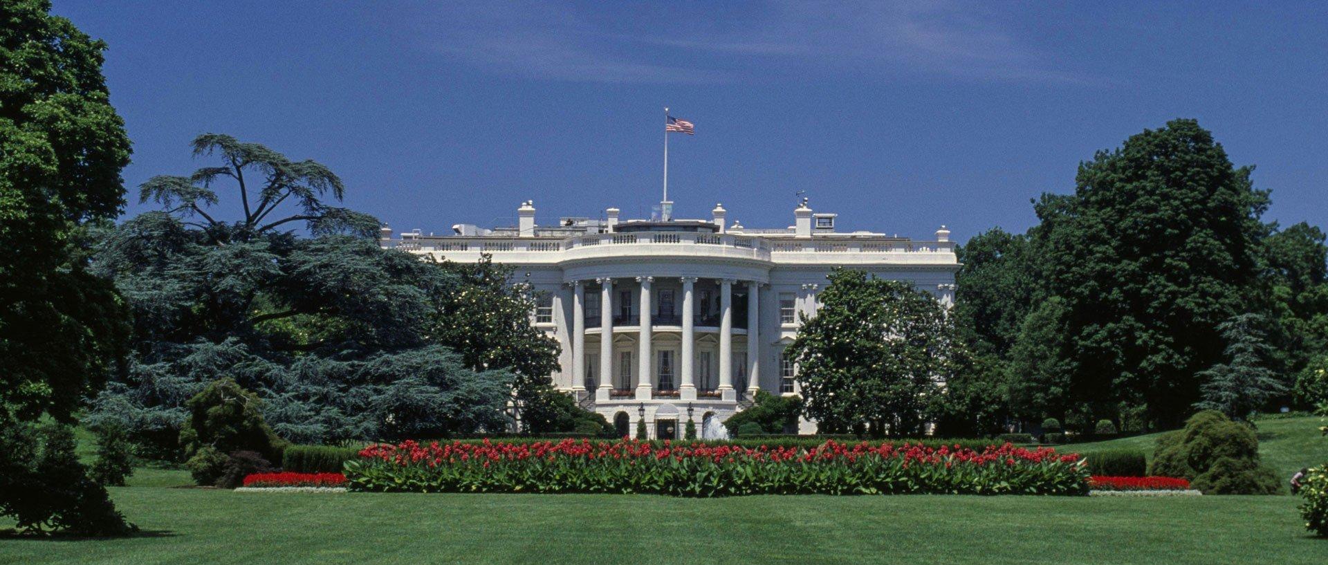 Gang Yanga szturmuje Biały Dom